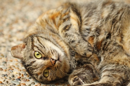 A curious cat close-up, it is good for introducing cat culture. photo