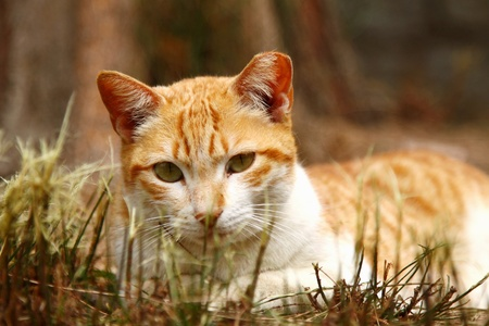 A cat on grasses photo