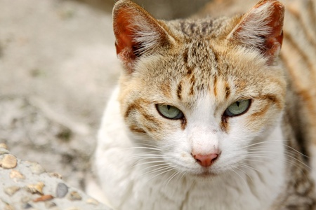 A cat with sharp eyesight photo