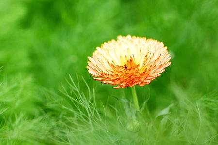 Orange spring flower photo