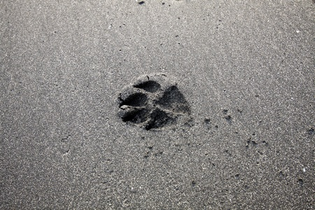 Dog foot print on sand photo