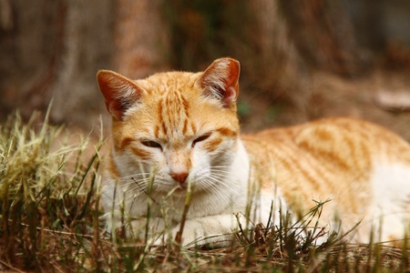 It is very sleep and lying on the grasses in winter time. photo