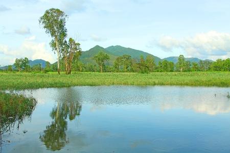 mitigation: Hong Kong wetland