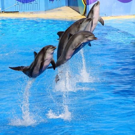Les dauphins sautant haut de l'eau bleue