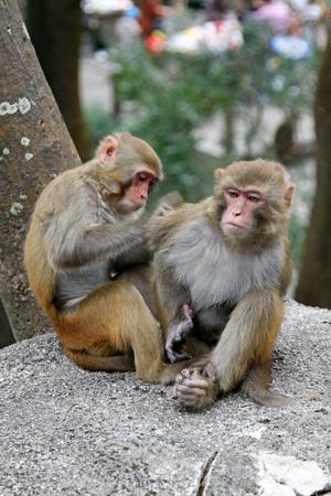 Monkeys photo