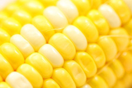 Corn close-up. photo