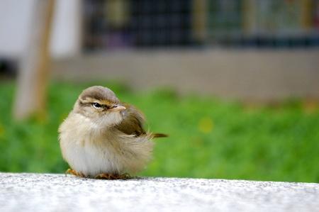 A bird on the floor photo