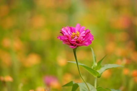 Pink flowers in spring background photo