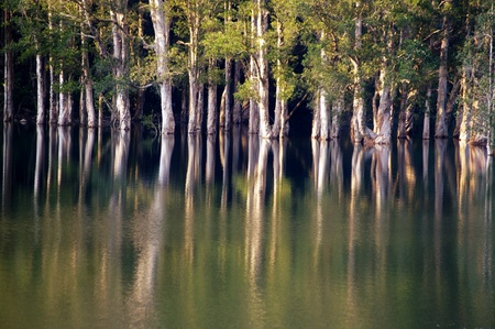 Forest in water photo