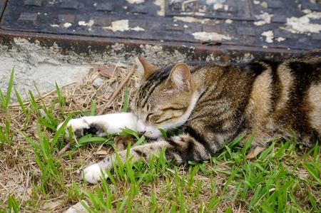 It is very lazy and lying on the grasses. photo