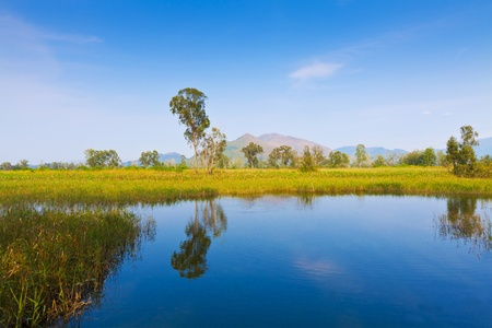Wetland pond in Hong Kong Stock Photo - 13191730