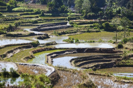 Rice terraces at day Stock Photo - 16397033