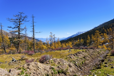 The mountain autumn landscape with colorful forest  photo