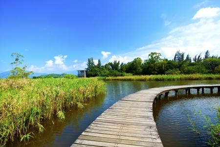 Wetland wooden path in summer  photo