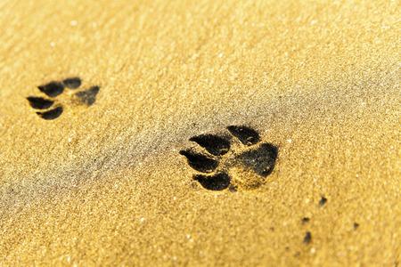 sand mold: Dog footprints on beach Stock Photo