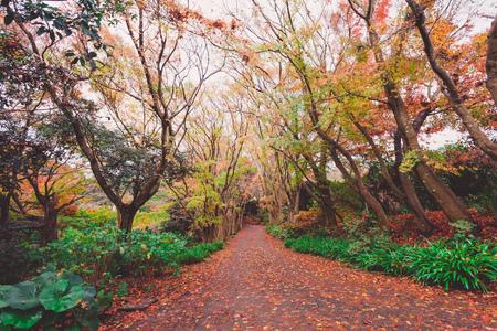 momiji: Autumn forest in Japan Stock Photo