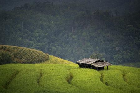 arroces: Hermosas terrazas de arroz, el sudeste de Asia Foto de archivo
