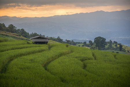 south east asia: Beautiful Rice Terraces, South East Asia