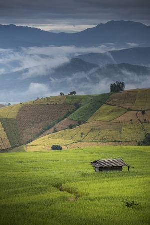chaingmai: Beautiful Rice Terraces, South East Asia