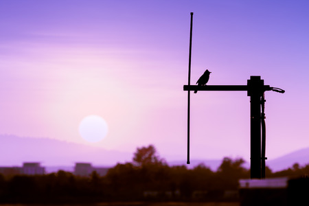 Silhouette bird hanging on dipole antenna in the evening wint sunset in background. Stock Photo