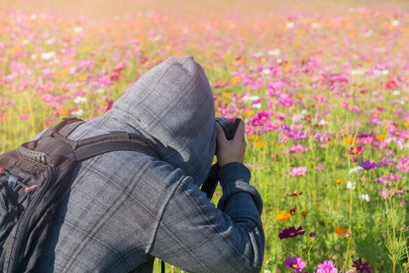 photographer take a photo in cosmos flowers field