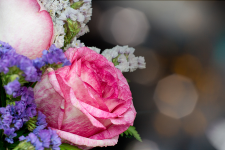 pink-white rose with bokeh background