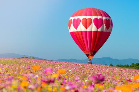 コスモスの花畑の熱気球 写真素材