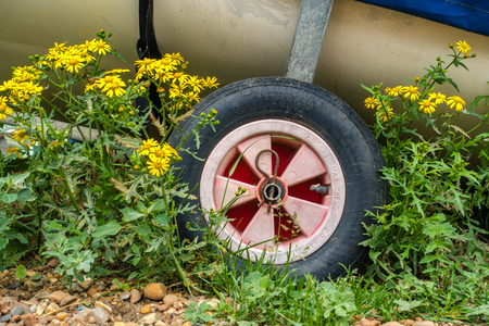 strapped: The wheels of a boat trailer with a boat strapped in. Flowers and beach stones surround the trailer