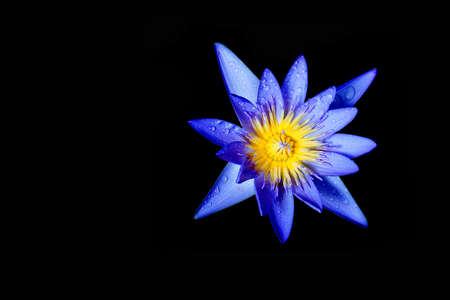 flor de loto: loto en negro Foto de archivo