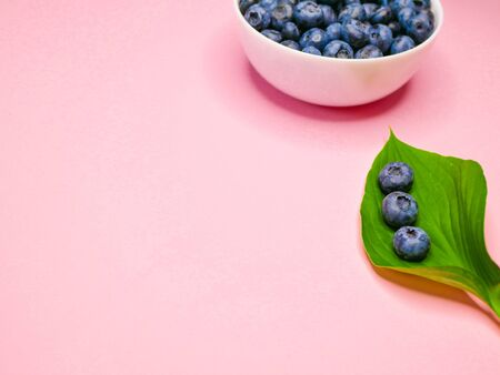 blueberries on a green leaf. pink coral background. Blueberries with leaf close-up. Fruit still life for organic healthy food