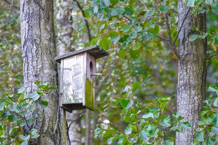wooden birdhouse on a tree. Wooden birdhouse on the tree, close up. Wooden birdhouse on the tree in public park.