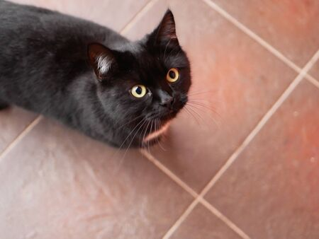 Black cat asks for food. Mystical black cat on the tile. A thin black stray cat asks for food. Black panther on a tile road Archivio Fotografico - 134374989