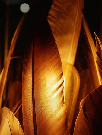 glowing feathers. close-up. in the dark yellow. gold feathers. Archivio Fotografico - 139821147