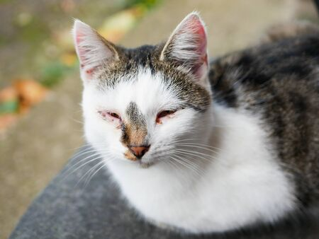 Sick cat eyes. cat black and white coloring. the cat has sore eyes. Abandoned and sick. cat on the street