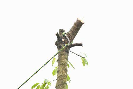 Seil an einem Baum. Bergsteigen in den Bäumen. Ein Spiralkabel an der Spitze eines Baumes
