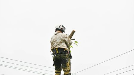 Climber on a tree. Climber on a white background. Arborist man cuts branches with a chainsaw and throws it to the ground. A worker with a helmet works at a height in the trees. Lumberjack works with a chainsaw Foto de archivo
