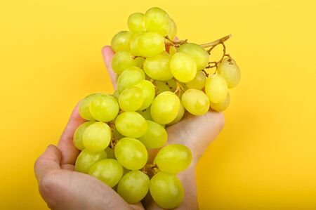 grapes are laid out on the hand. on a yellow background. Volumetric grapes. A bunch of green grape bush. Flat lay. Archivio Fotografico - 140116327