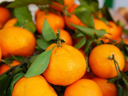 tangerines with leaves close-up. Tangerine farming farm. A lot of mandarin with leaves. View from above
