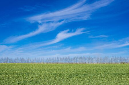 green field against the blue sky.