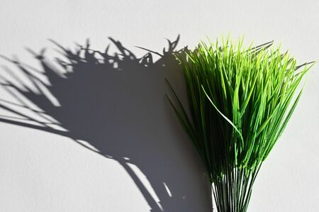 The shadow of green grass. Top view of a long shadow falling from grass.
