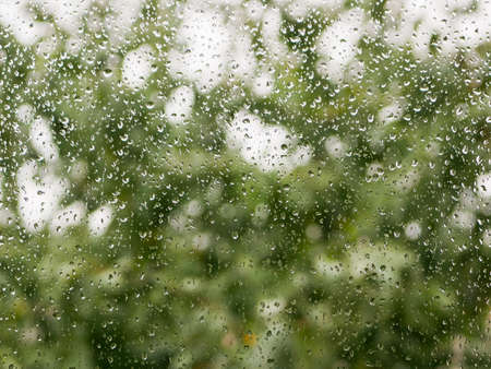 raindrops on the glass. Rainy weather. against the background of a blurred background of nature. Raindrops on the window on an autumn day. green tree on the background.