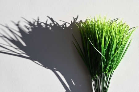 The shadow of green grass. Top view of a long shadow falling from grass