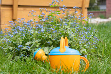Multi-colored watering can for flowers. 写真素材