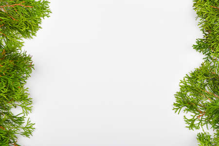 coniferous green branches on a white background. View from above. Place for writing. Christmas background