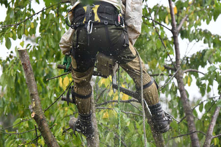Lumberjack works with a chainsaw. Climber on a white background. cuts branches with a chainsaw and throws it to the ground. Lumberjack works with a chainsaw. In special clothes. Professional in their field Banco de Imagens