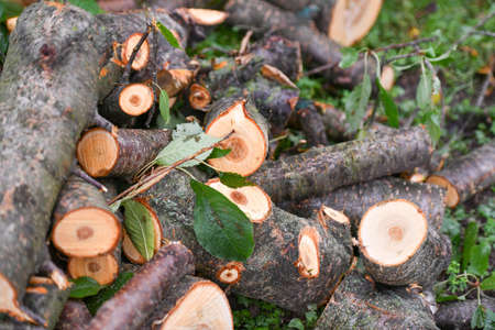 fresh logs. Close-up. Fresh firewood. eco forest. Fresh sawn logs and stump. Logging firewood. Fresh sawn logs and stump with rings of trees. Cut texture. Sticks, slivers and roots around. Stock fotó