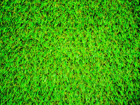 bright green lawn close-up. view from above. acid green color. Stockfoto