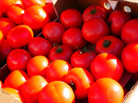 Red tomatoes in a cardboard box in the sun. High quality photo