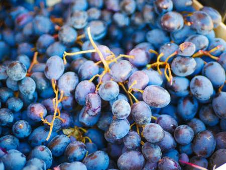Bunch of blue grapes close up. Reklamní fotografie