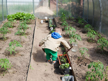 A child plays in a greenhouse for growing vegetables. High quality photo